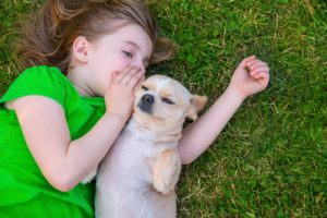 young-blond-girl-playing-with-chihuahua
