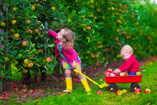 apple-picking-kids
